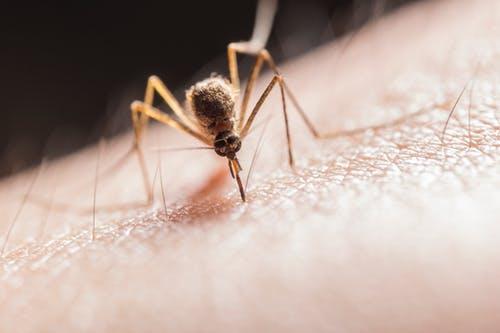 Nudges können sinnvoll bei Malaria eingesetzt werden